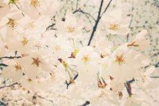 flower383-2
