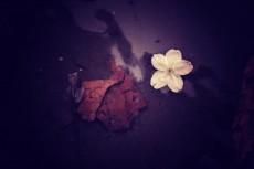 flower389