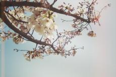 flower390
