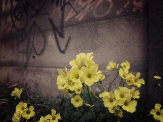 【高解像度】落書きと花のある風景(3パターン)