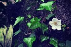 flower398