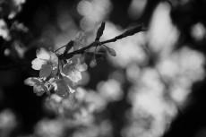 flower405-3