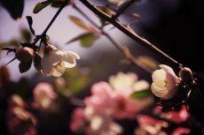 flower406