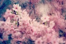flower417