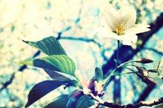 flower402