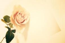flower424-2