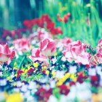 【高解像度】色とりどりの花々(3パターン)