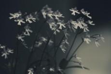 flower439-2