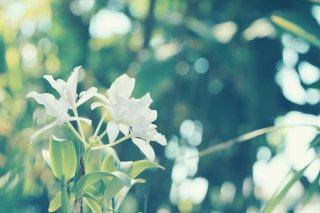 【高解像度】光の中に咲く白い蘭(3パターン)