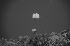 flower442-3