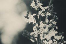 flower443-3