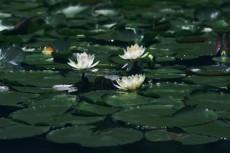flower455
