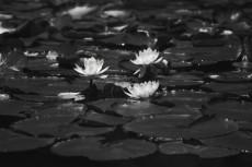 flower455-3