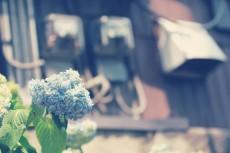 flower462