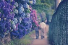 flower464