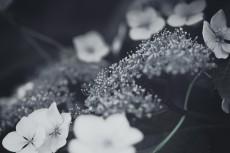 flower471-3