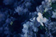 flower488
