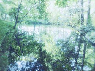 【高解像度】光溢れる森