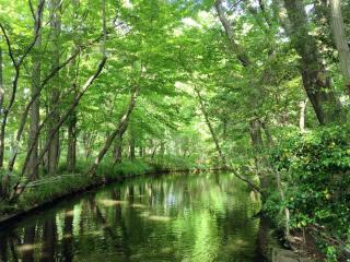【高解像度】万緑の森
