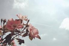 flower506