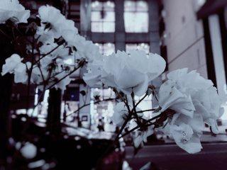 【高解像度】街中の白い花