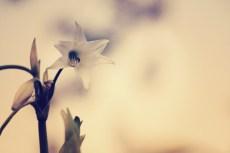 flower515-2
