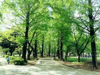 【高解像度】穏やかな日曜日の公園