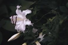 flower555-2