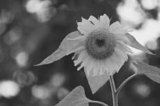 flower562_2-3