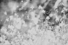 flower566-3