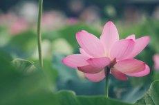 flower568