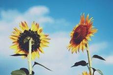 flower573-2