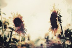 flower574-2