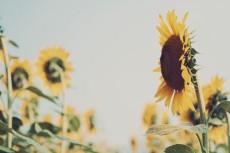 flower578-2