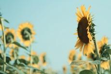 flower578