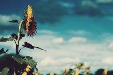 flower587
