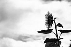 flower591-3