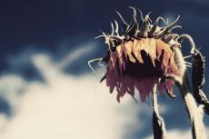 flower592-2