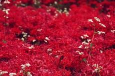 flower596