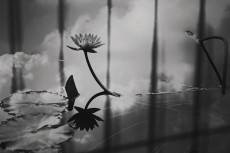 flower599-3