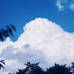 【高解像度】入道雲と葉のシルエット(3パターン)