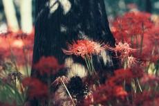 flower607-2