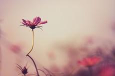 flower608-2