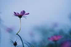 flower608