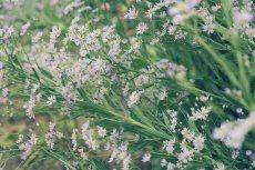 flower622