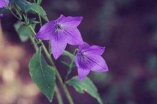 flower628-2