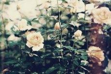 flower645