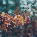 【高解像度】雨の中の木の葉(3パターン)