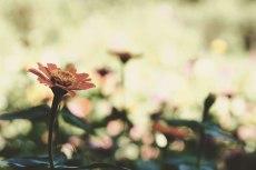 flower661-2