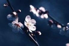 flower666